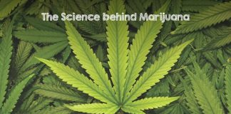 Scientific Benefits of Marijuana. Side effect of weed. Myths about Cannabis