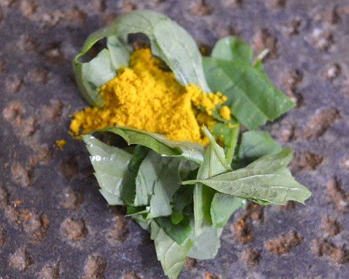 Indian nettle and turmeric